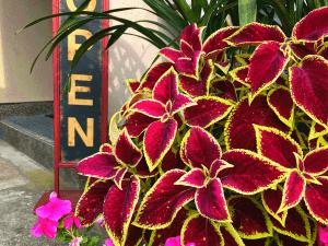 おしゃれな看板とお客様を出迎える植物たち